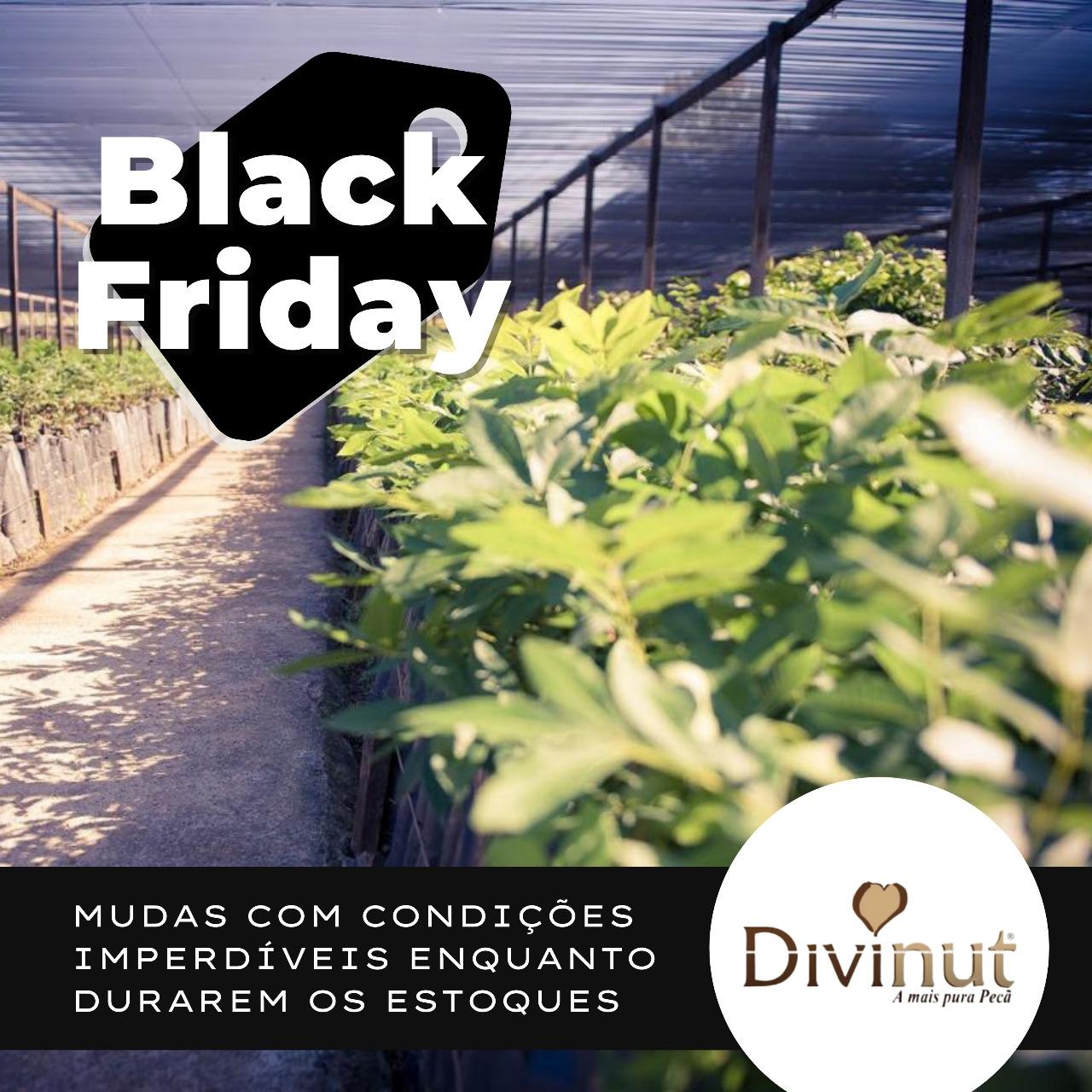 Black Friday Divinut 2020